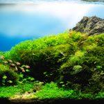 Segini Modal yang Dibutuhkan untuk Membuat Aquascape Cantik